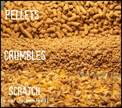 PELLETS: chicken feed shaped into small, bullet-sized pieces