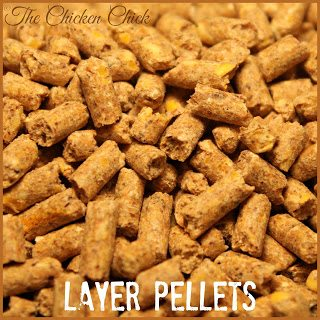 LAYER FEED/LAYER RATION: a nutritionally complete chicken feed formulated with calcium for laying hens.