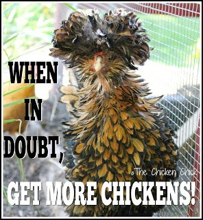 When in doubt, get more chickens!