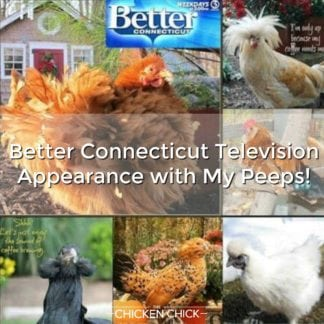 Better Connecticut Television Appearance with My Peeps!