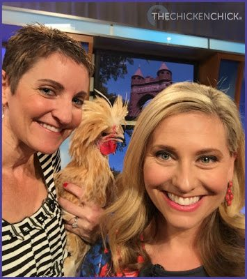 Big field trip for a half dozen of my chickens this morning as we visited a television studio to film a segment of Better Connecticut on WFSB Channel 3 with Kara Sundlun and Scot Haney!