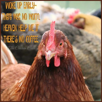 Woke up early- there was no worm. Heaven help me if there's no coffee.