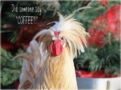 "Did someone say, ""COFFEE?!"""