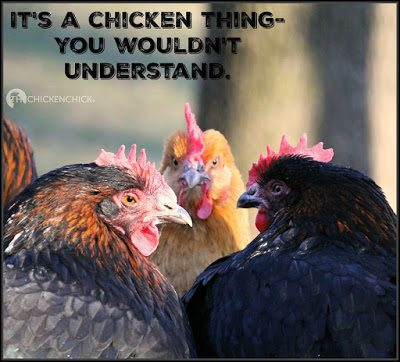It's a chicken thing- you wouldn't understand.