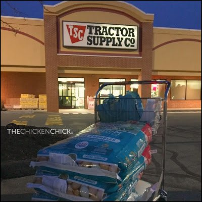 Corporately owned feed stores such as Tractor Supply Company (TSC) typically begin getting orders of chicks into their stores from hatcheries mid-February though April-ish. The main advantages are the low per chick cost and ability see & select each chick before purchasing.