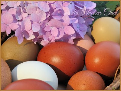 Hens require precise amounts of each essential dietary component, in the right forms and at the right times to live long, healthy lives and make high-quality, normal looking eggs.