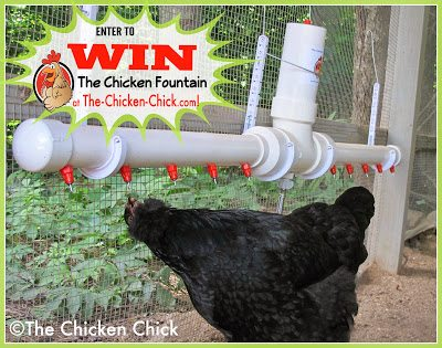 The Chicken Fountain Giveaway at The Chicken Chick®