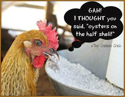 Of the approximately 25 hours needed to create an egg, 18-20 of them are dedicated to shell formation, which occurs overnight while a hen sleeps. A hen can use and replace the calcium it carries in its bloodstream up to 100 times overnight!