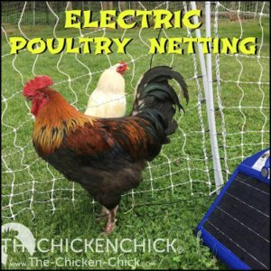 Electric poultry netting