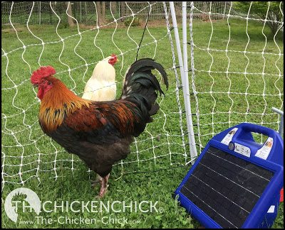 Premier 1 Electric Poultry Netting