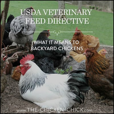 The Veterinary Feed Directive: What IS it & What it Means to Backyard Chickens