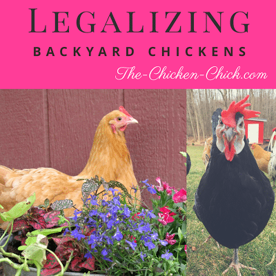 While it may no longer be necessary to grow one's own food, countless families around the United States want to, but are forced to wage battles against zoning departments and municipalities for the right keep chickens.