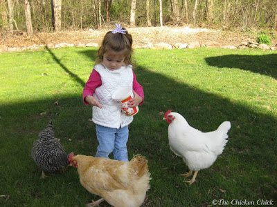 Backyard chickens are a living lesson to children that eggs do not magically appear in cartons and a chicken does not originate from the supermarket freezer section in nugget form.