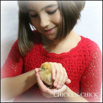 Always supervise children handling chicks. They should be instructed to support the chick in one hand underneath the feet and one hand gently securing the wings, and never squeeze.