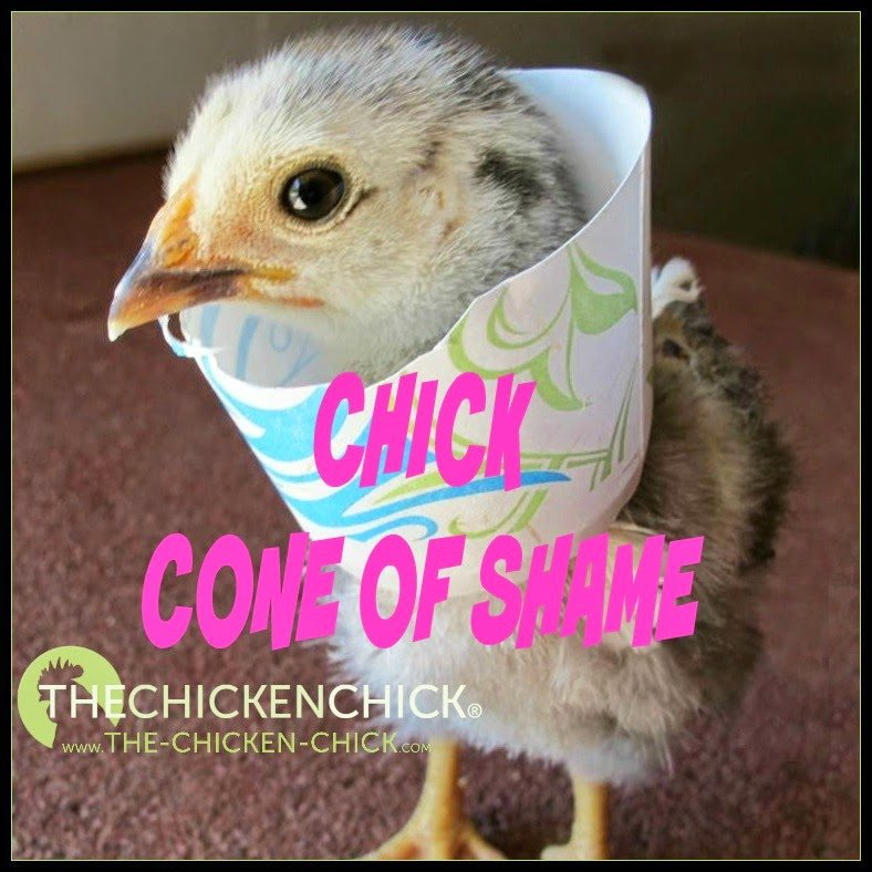 Chick Cone of Shame addresses self-picking chicks by limiting their range of motion.