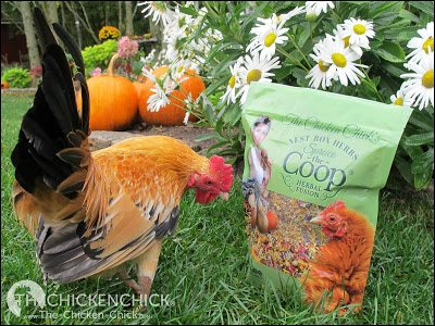Why Nesting Material Matters | Adding colorful, aromatic dried herbs and flowers to a nest box is a fun way to spruce up the coop, but beware of misleading claims that herbs tossed inside the coop or grown around it offer a wide array of beneficial properties that they do not provide.
