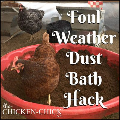 Foul Weather Dust Bath for Backyard Chickens