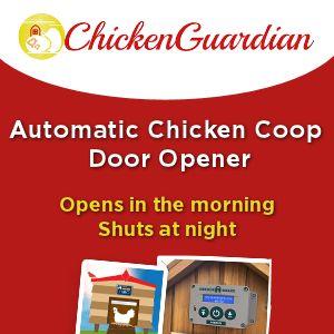 Chicken-Guardian_4803b655fbaa5bc0b3214f8f30ac053b.jpg