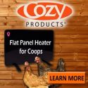 Cozy-Products-600-x-600-new-chicken-chick-ad-e1526561356568.jpg