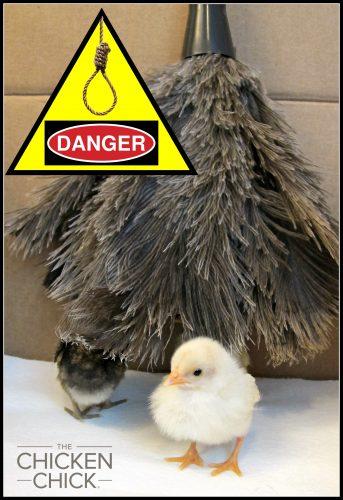 Feather Duster chick strangulation hazard