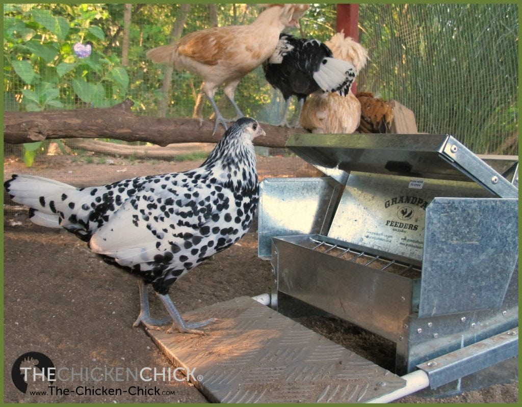 Grandpa's Feeder Giveaway at www.The-Chicken-Chick.com