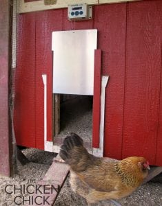 Automatic chicken door opener