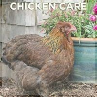 Chicken Care