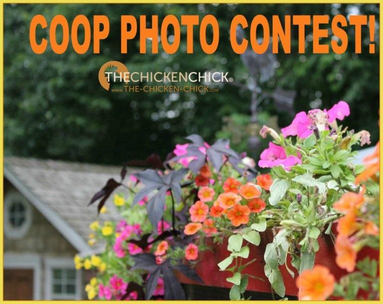 Coop Photo Contest