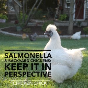 Salmonella & Backyard Chickens Keep it in Perspective