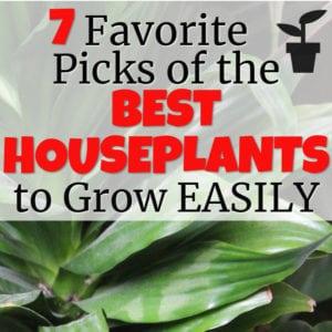 7 Best Houseplants to Grow Easily