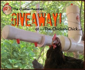 Chicken Fountain Giveaway