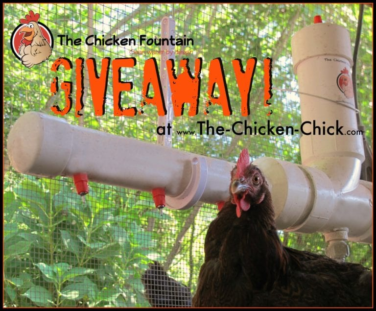 The Chicken Fountain Giveaway