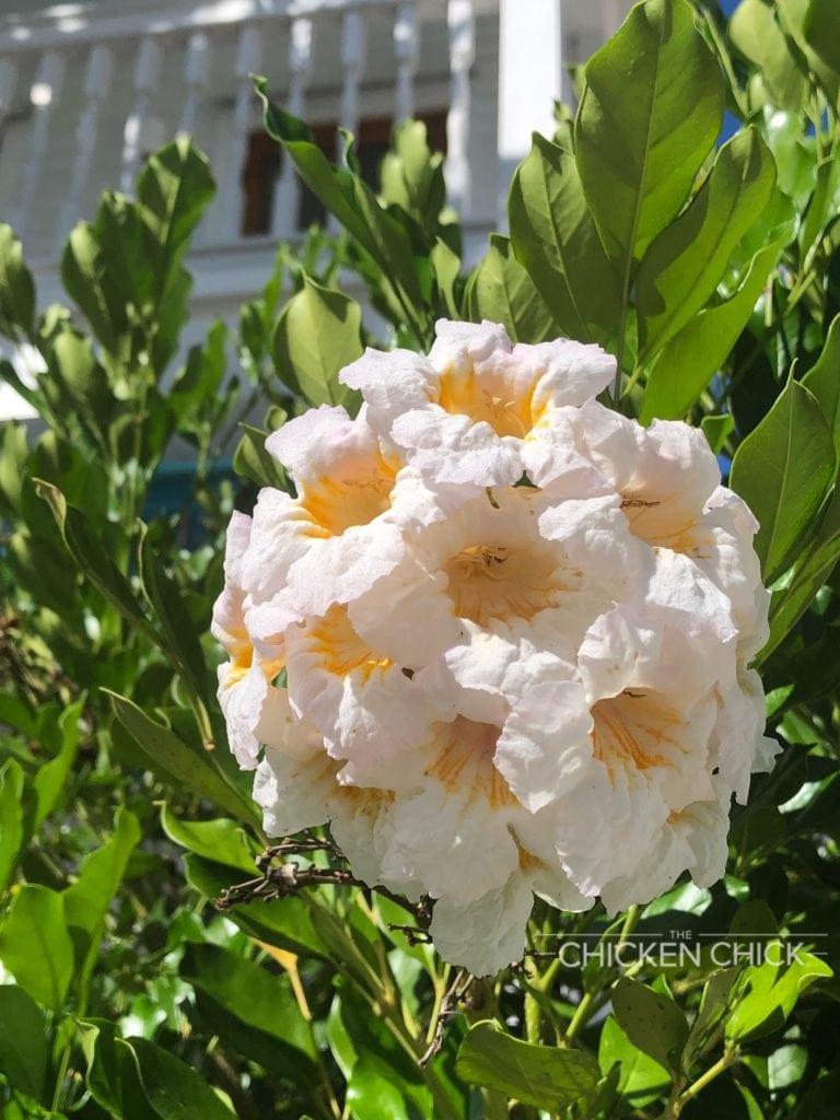 Key West Flowers & Foliage