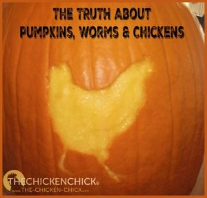 The truth about pumpkins, worms and chickens