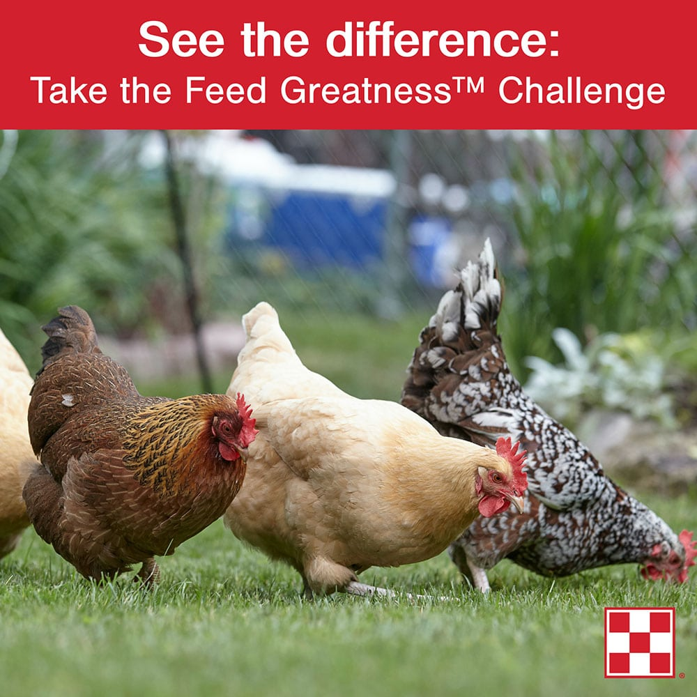 Purina-Feed-Greatness-Challenge.jpg