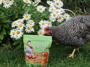 Spruce the Coop® Herbal Fusion