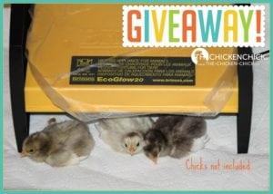 Brinsea EcoGlow20 Brooder Giveaway