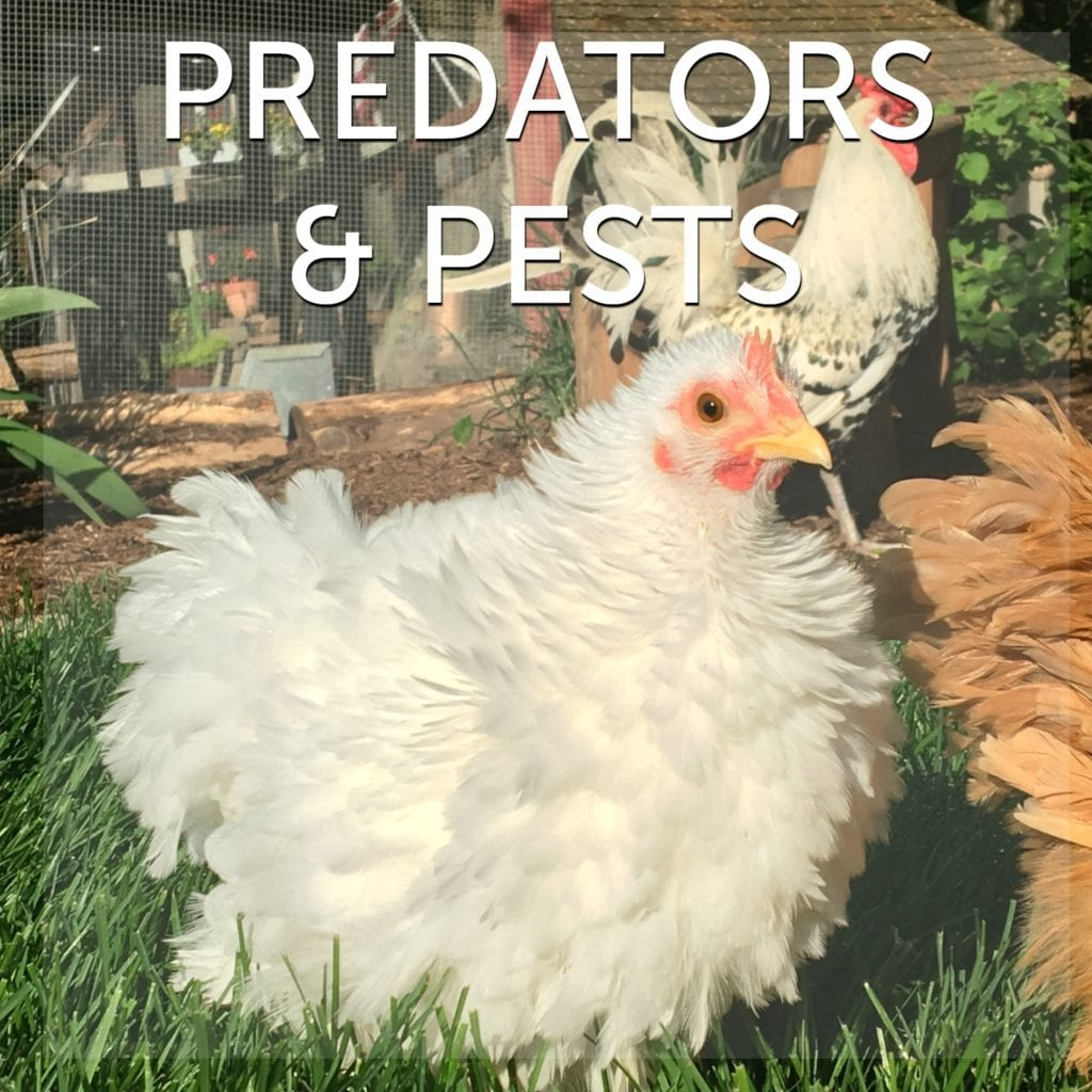 Predators & Pests