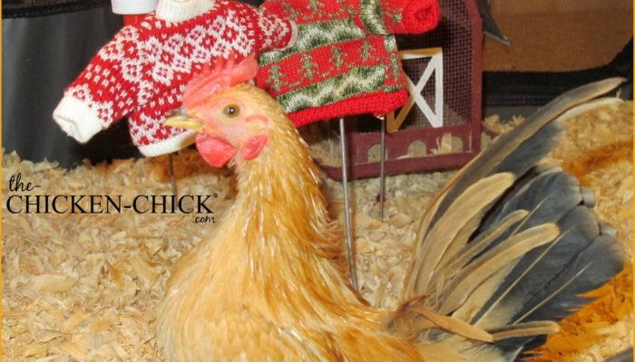 Just say NO to Chicken Sweaters