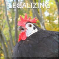 Legalizing Backyard Chickens
