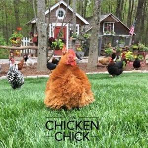 Rachel | The Chicken Chick®
