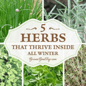 5 Herbs that Thrive Inside all Winter, shared by Grow a Good Life