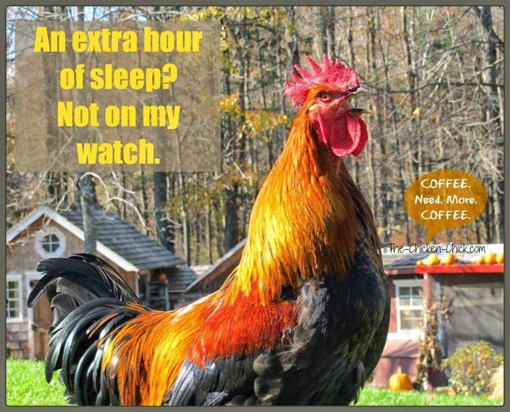 An extra hour of sleep not on my watch