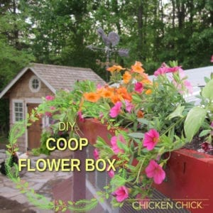 DIY Chicken Coop Flower Box | The Chicken Chick®