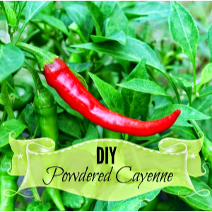 DIY Cayenne Powder, shared by Oak Hill Homestead
