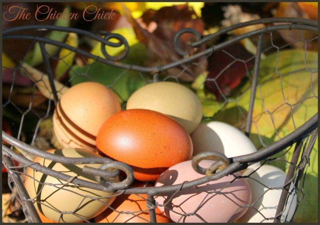 Eggs in Basket - The Chicken Chick