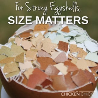 For Strong Eggshells, Size Matters | The Chicken Chick®