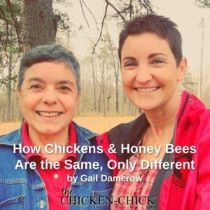 Gail Damerow How Chickens & Honey bees are the same, only different