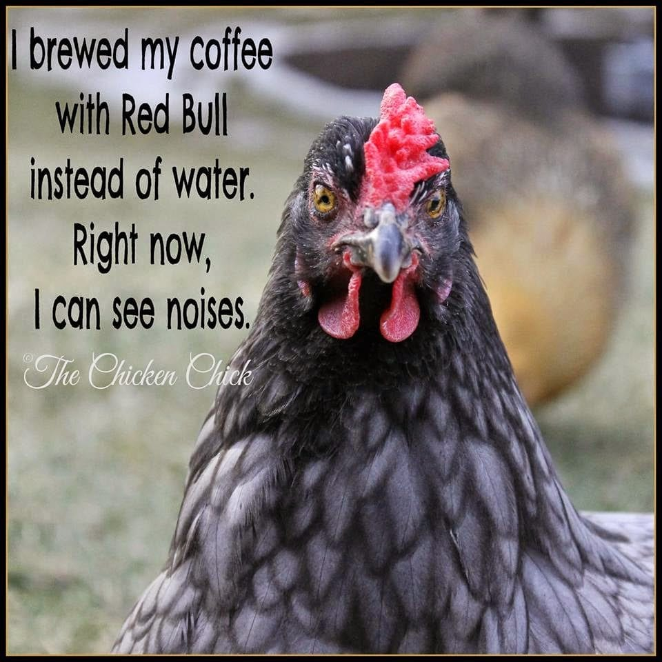 I brewed my coffee with red bull instead of water right now I can see noises