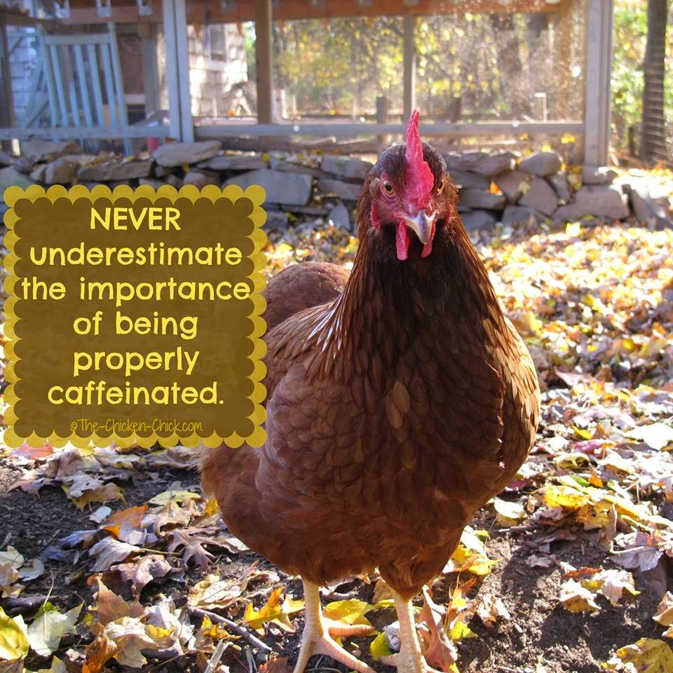 Never underestimate the importance of being properly caffeinated